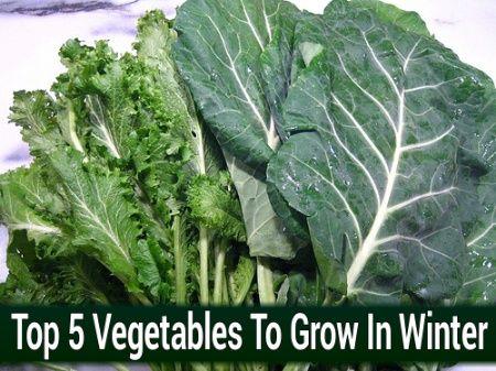 Top 5 Vegetables To Grow In Winter Winter Vegetables 640 x 480