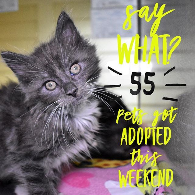 Whats That You Say 55 Fabulous Pets Found Homes This Weekend Yes Adopt Dont Shop Cat Catsofinstagram Meow Humane Society Pretty Cats Pets