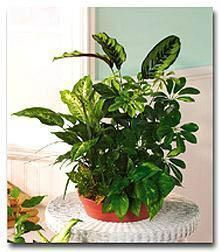 72 best images about green and peridot on pinterest for Low maintenance plants for office