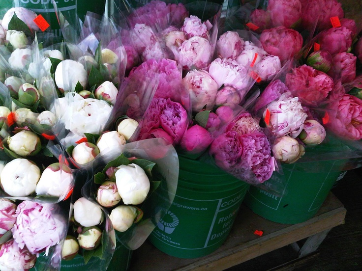 I love peonies!  I CANNOT believe I am actually repinning what you also chose. Great minds . . .