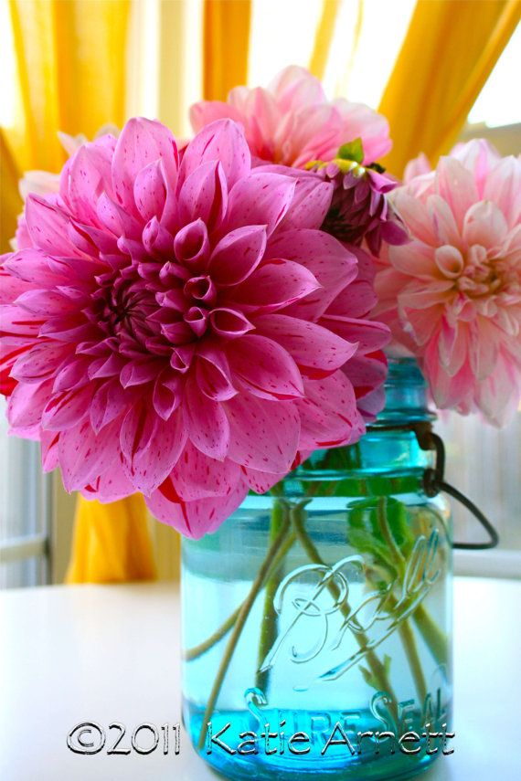 Hot Pink Dahlia by DecoGirlPhotography on Etsy, $15.00
