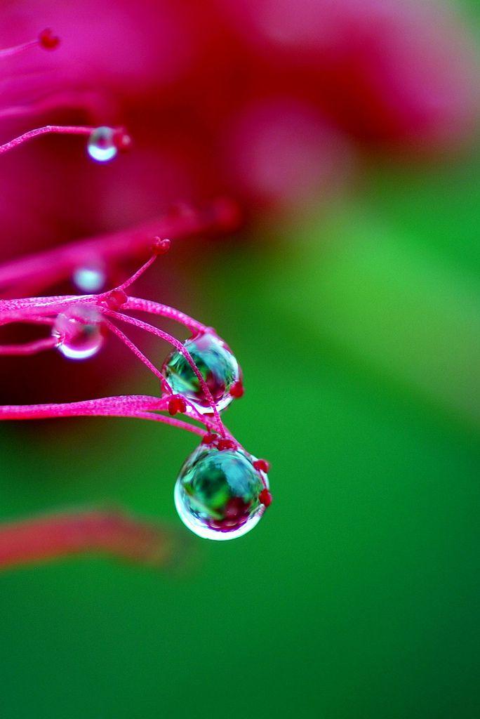 Rain drops (drops #1) | Have a nice rain drops day. | Flickr