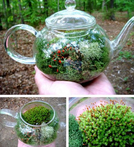 "Check goodwill for clear containers--I found this terrarium teapot and 12 ""mini worlds"" on the web ecoist. I know terrariums are in but this is something incredibly special - and even better it's ALIVE !"