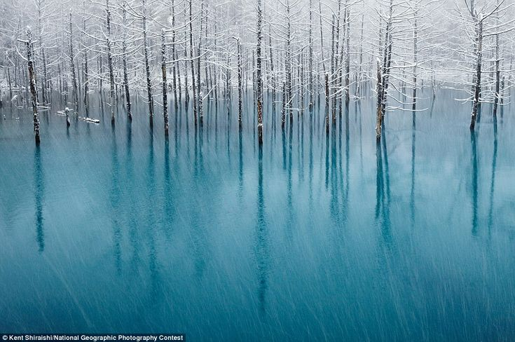 Glowing   ::  Blue Pond & First Snow,  Japan