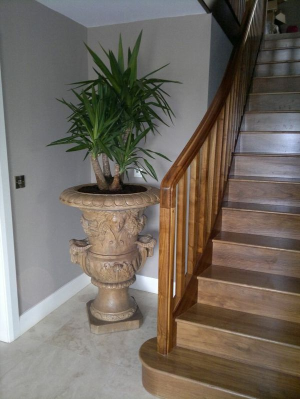 38 best images about pflanzen und blumen on pinterest for Yucca wohnzimmer
