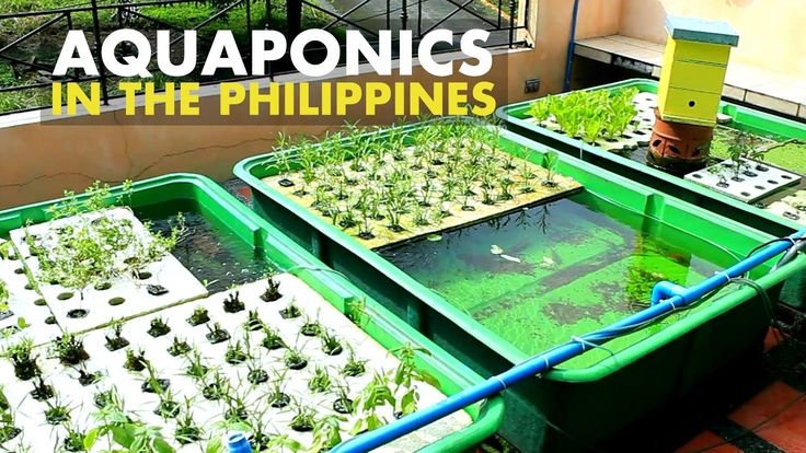 Agribusiness in the Philippines Piggery Aquaponics A