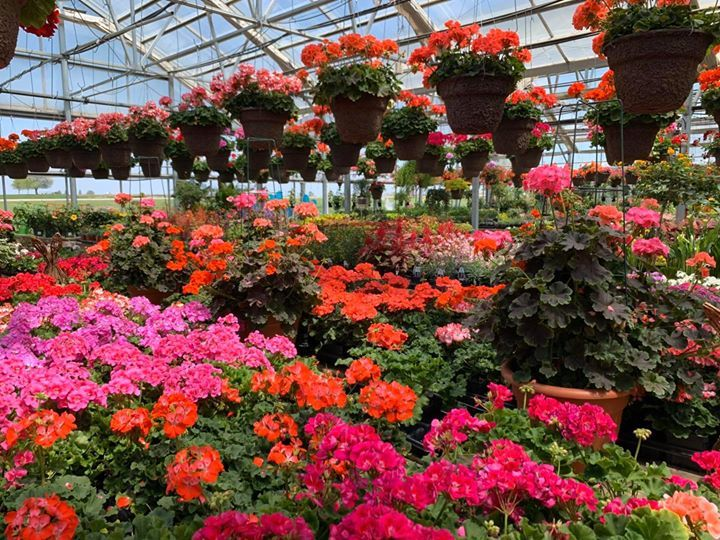 Untitled Garden Center Beautiful, Blooms Garden Center