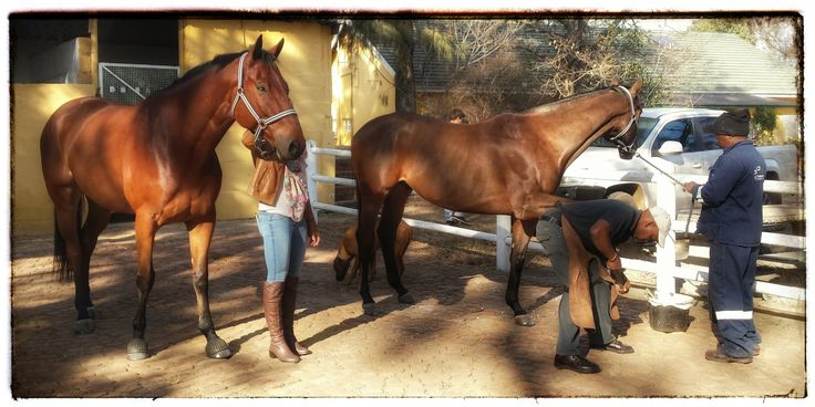 Christie and her 2 beautiful horses from Thabazimbi