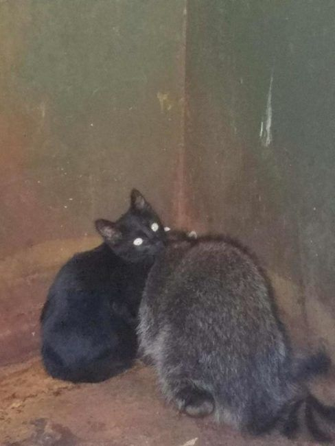 A Knoxville, Tennessee police officer has been receiving a ton of praise after he discovered a kitten and a raccoon cuddled together in the corner of a dumpster keeping each other warm. On the Facebook page for the Knoxville Police Department, Animal Control Officer Nick Powell had been responding to a report of an animal …