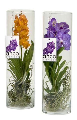 orquideas y montajes