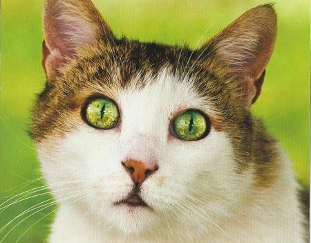 Cat - Cats Wallpaper ID 1936535 - Desktop Nexus Animals