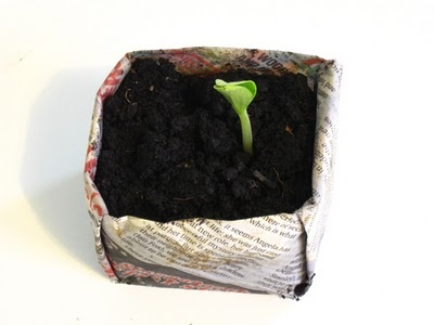 Origami Newspaper Seed Starter Box