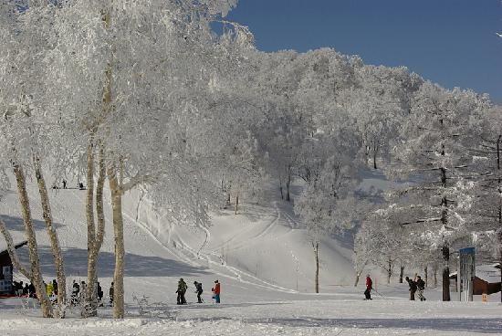 Nozawa Onsen, Japan (more amazing skiing!!)