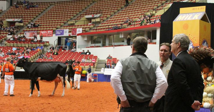 "Agriculture Secretary Tom Vilsack (R) at the cow judging contest at the 2012 World Dairy Expo in Madison, WI, in 2012.  Stephen Schmieding, <a href=""https://creativecommons.org/licenses/by/2.0/"">CC 2.0</a>"