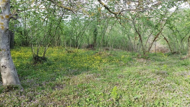 Price: 382.000 TL Project:HACIMERCAN DERBEN DÜZÜ.  Type:Planned - Residental  Type:Land   Category:For SaleCity:SAKARYA   State:SAPANCA   Parcel:315   Pafta:5  Status:Sale  Area:2120,00  M2 Price:100  State :HACIMERCAN  Deed:Detached Land  Heating:No  Construction:Bond & Garden  Credit:Yes