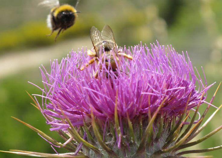 Τι συμβαίνει και εξαφανίζονται οι μέλισσες από τον πλανήτη;