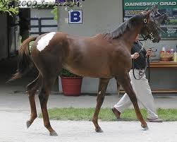 44 Consolidator x Waterwild colt (Fasig Tipton July sale '09)