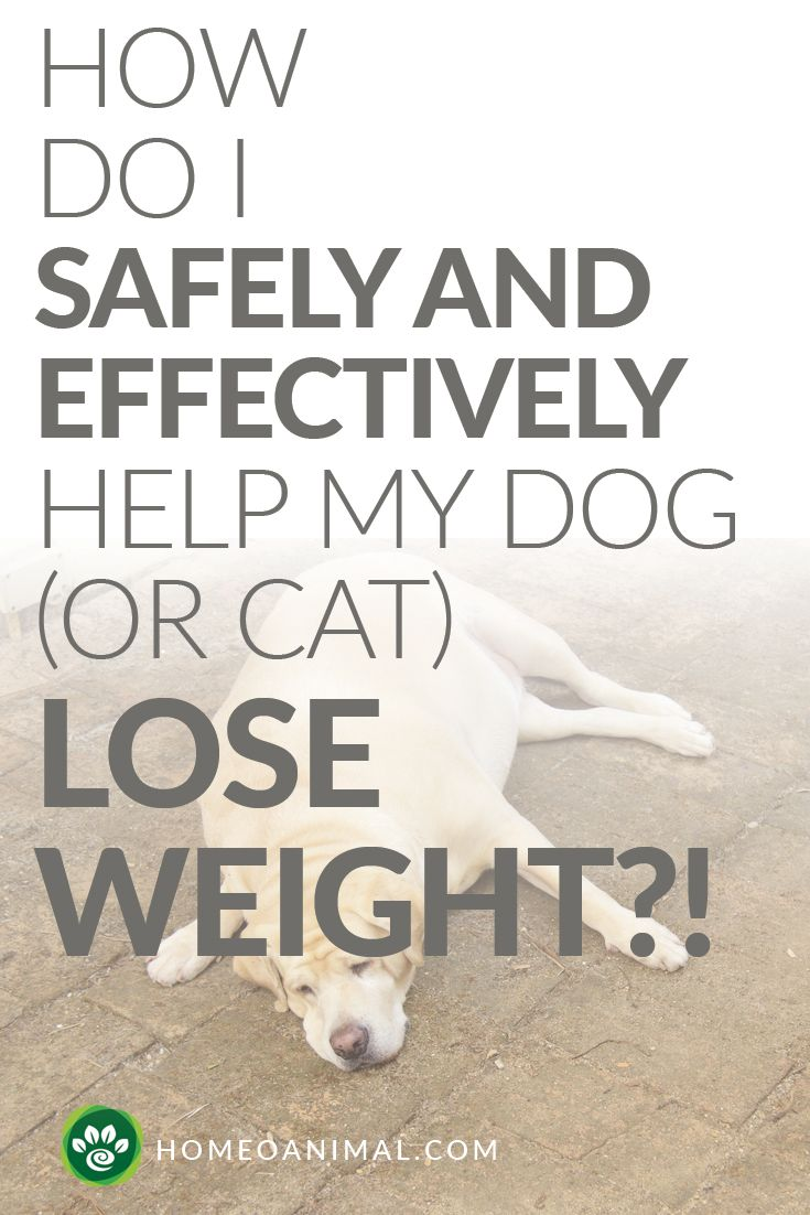 how make dog lose weight