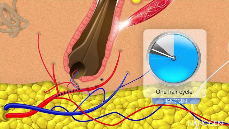 Hair Cycle and Nanogen Hair Growth Factors - Hiuksen kasvu vaiheet