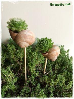 É hora do caracol   conchas de caracóis plantadas   – Garten