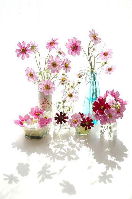 Cosmos flowers - Beautiful