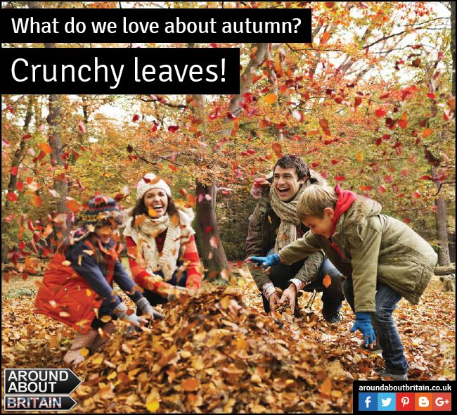 What do we love about Autumn? Crunchy Leaves. Take walks with your family and enjoy the beautiful Autumn leaves and colours! #AutumnColours #AutumnLeaves #Photography #Britain