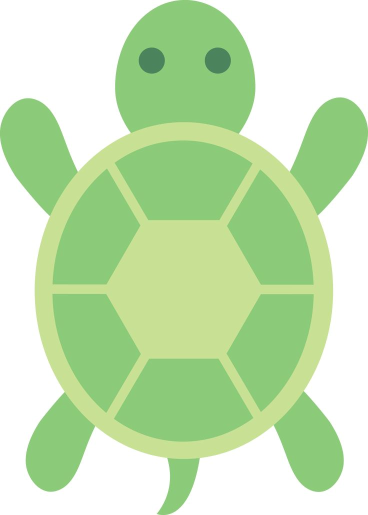 Control and Management of Turtles