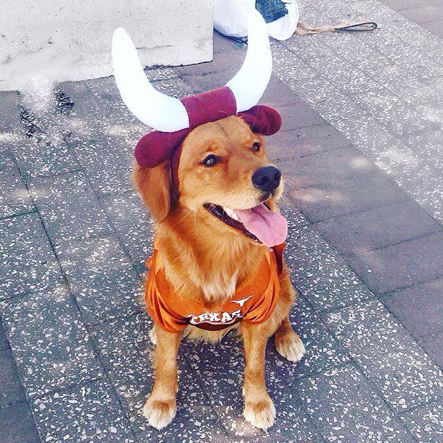 P (daniaustin) Texas longhorns outfits, Longhorn, Ut gift