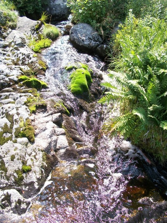 Stream on South West Cove Island