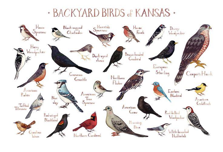 Image result for starling bird in KANSAS | Backyard birds ...