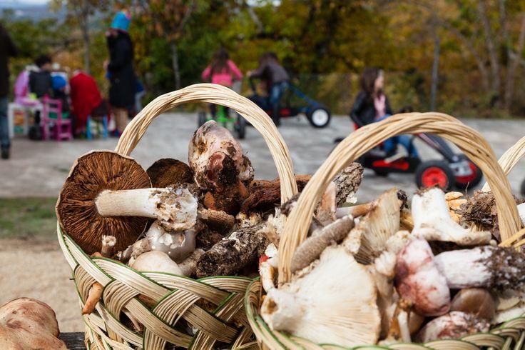Apanha de cogumelos (2013)