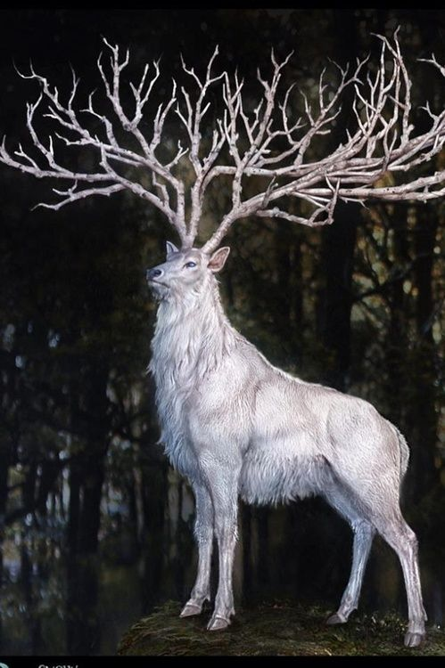 Herne, Lord of the Trees, in His Form of The White Stag In Celtic mythology, Herne is the god of the hunt and protector of the forest.