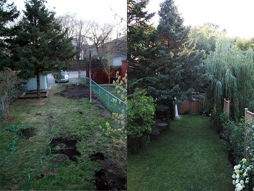 before and after pics owners added 3 screens total 300 and plants to backyard landscapinglandscaping ideaschain link fenceprivacy