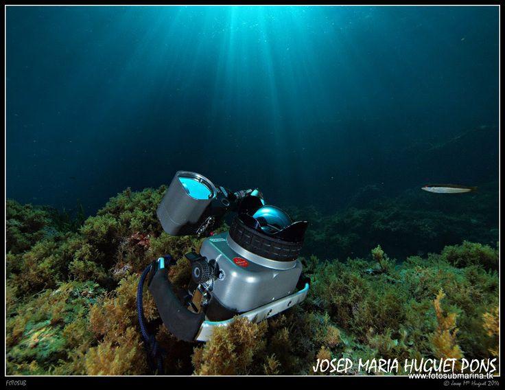 Fotos Submarinas: Tornada al Formatge Suís 19 - 04 - 14