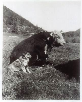 Sitting Bull ....