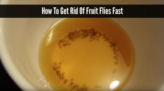 How To Get Rid Of Fruit Flies Fast Homestead Survival