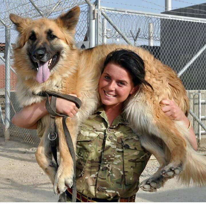 British Army (@BritishArmy) | Twitter Military working dog and handler.