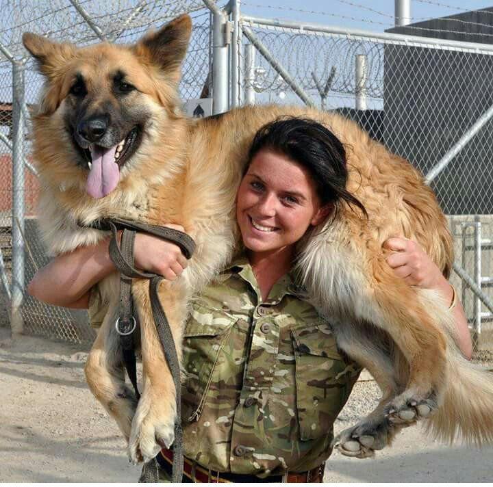 British Army (@BritishArmy) | Twitter Military working dog and handler.