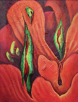 Erotocactus by Johannes Margreiter