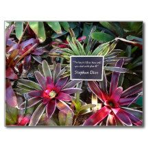 """Naples Florida Botanical Garden - Stephen Dias Quote """"The key to life is how well you deal with Plan B"""" #Postcard"""
