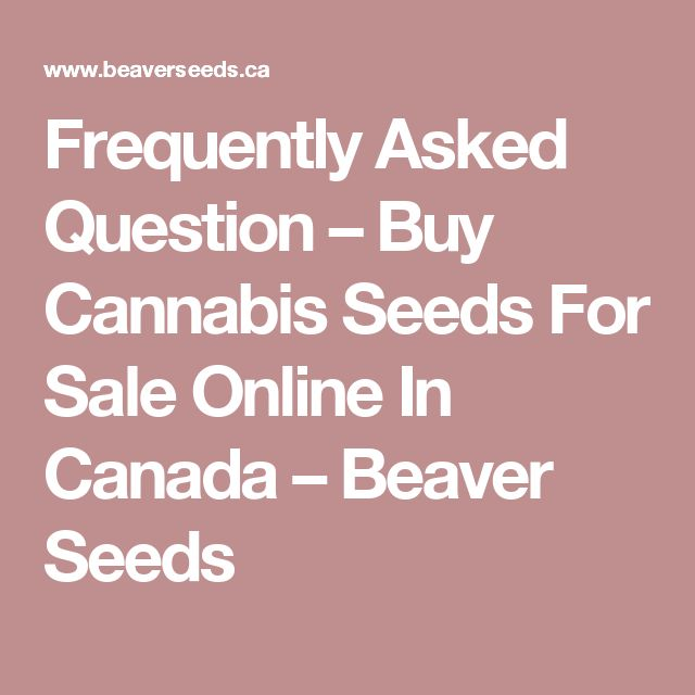 Frequently Asked Question – Buy Cannabis Seeds For Sale Online In Canada – Beaver Seeds