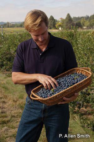 P Allen Smith: berry good tips for growing blackberries, raspberries & blueberries