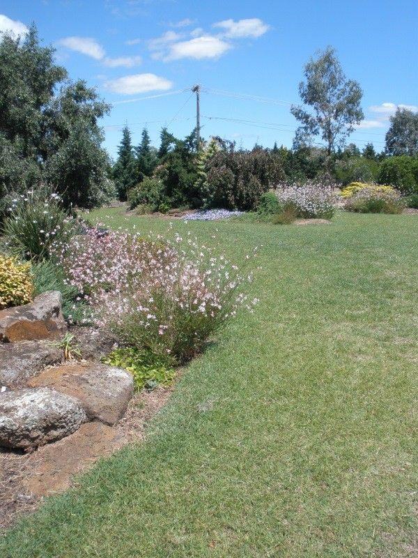 Redgrass (Bothriochloa macra) Australian native grass lawn.