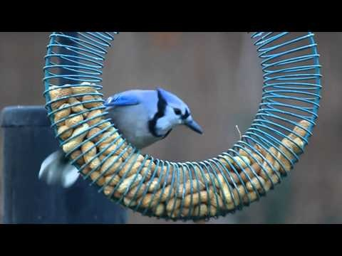 video for peanuts for the birds slinky and a coat hanger great garden idea 39 s pinterest. Black Bedroom Furniture Sets. Home Design Ideas