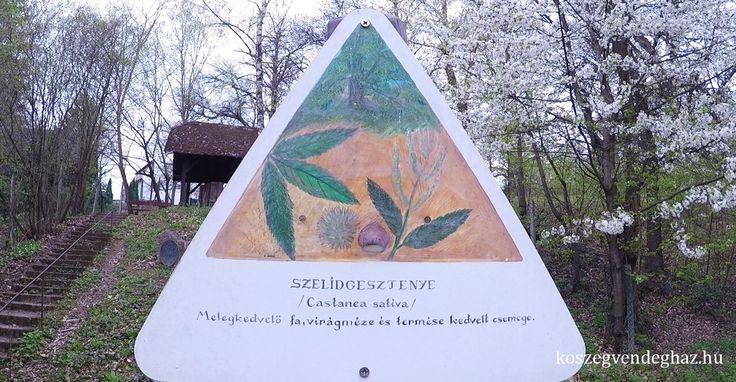 Óriásgesztenyefa maradványai Kőszeg #kőszeg #látnivaló #kirándulás #gesztenye