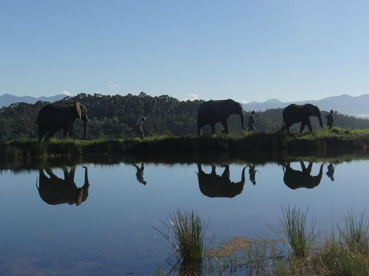Knysna Elephant Park - Knysna - Reviews of Knysna Elephant Park - TripAdvisor