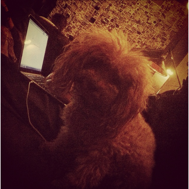 #puppystream #dustingbresler hanging at his home away from home #building_buddy @acehotel