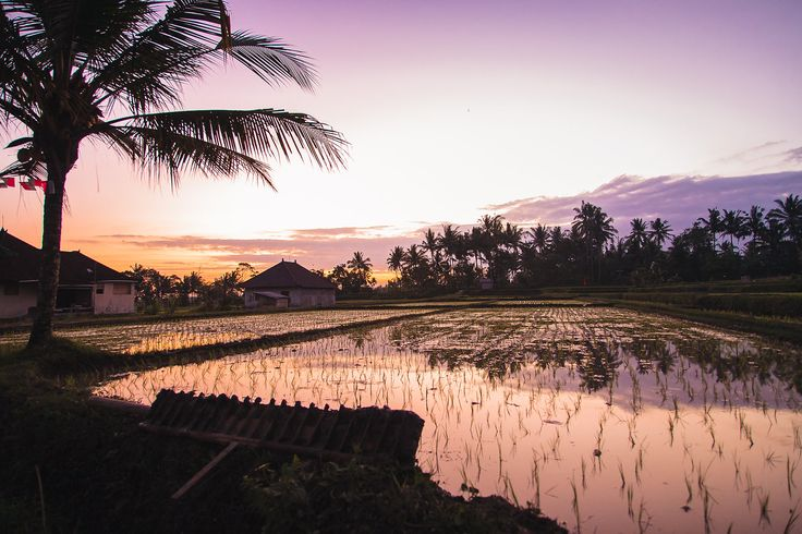 Bali photo collection by Michelle Wiese Photography
