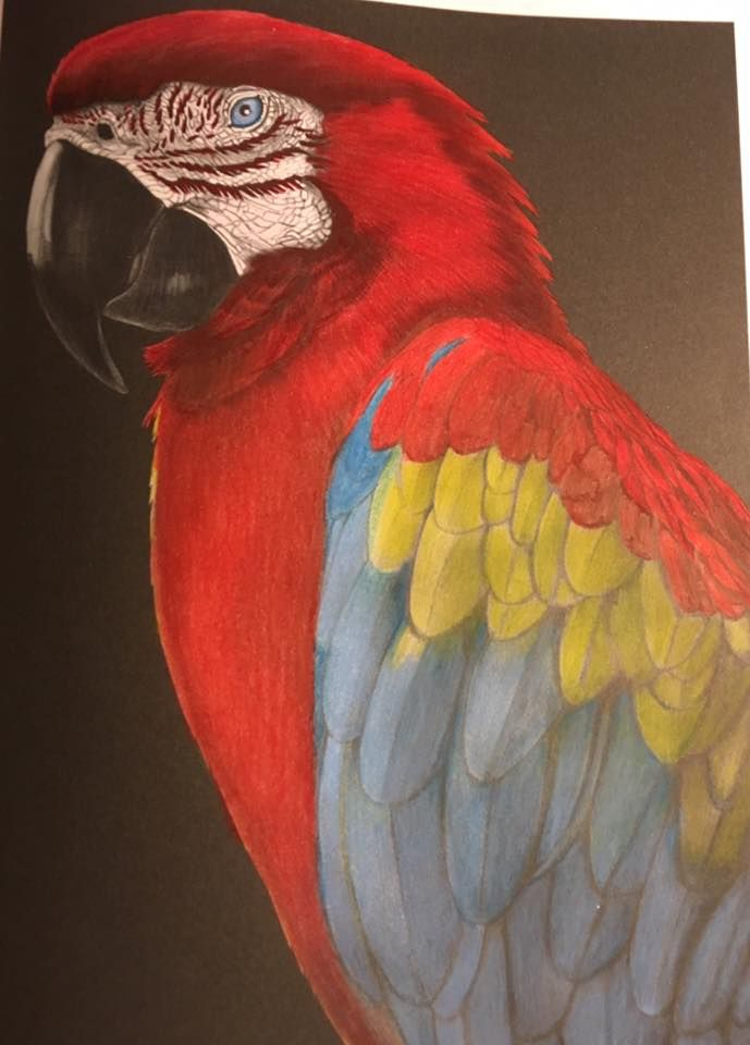 Macaw By Tammy Bean Animal Drawings Coloring Contest Coloring Books