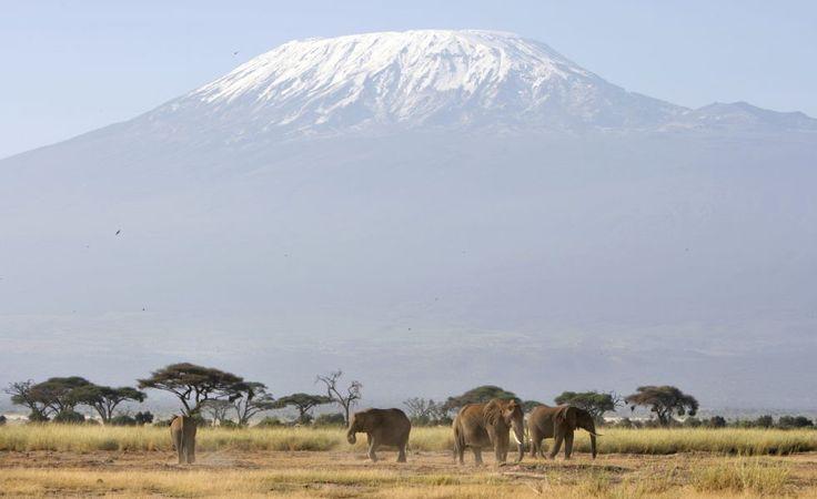 Cumbres del Kilimanjaro  Con casi 6.000 metros de altitud, es la montaña más alta de África. En las últimas décadas, diversos estudios han demostrado que la montaña ha perdido el 85% de la nieve. Si sigue a ese ritmo en menos de 15 años las zonas cubiertas de nieve permanente habrán desaparecido.